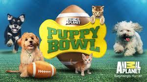 puppy bowl. Modren Puppy Puppy Bowl Intended O