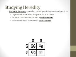 unit   growth and heredity cells can grow only so big before they    studying heredity punnett squares chart that shows possible gene combinations organisms have at least two