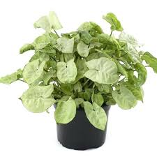 common house plants images common indoor plants images