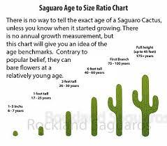 Diagram Of Saguaro Cactus Parts Of A Cactus For Kids Diagram