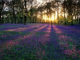 Resultado de imagem para Imagens do campo florido