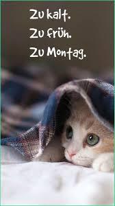 Lustige Bilder Zum Runterladen Kostenlos Luxus Bekannt Katzen Bilder
