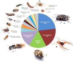 Small Bugs In Bedroom How Many Bugs Live In An Average House Business Insider