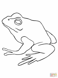 Small Picture Eyed Tree Frog Coloring Page Free Printable Pages Home Free Frog