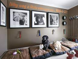 designing the perfect pet space in your