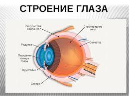 Презентация по окружающему миру на тему Зрение класс СТРОЕНИЕ ГЛАЗА