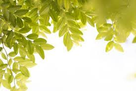simple nature background.  Background Simple Nature Background With Leaves And Copy Space Stock Photo  98266962 In Nature Background A