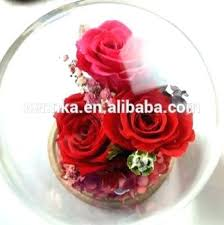 forever rose in glass dome beautiful preserved flowers three 3 roses for bush s sal
