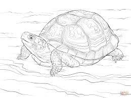 Small Picture Cute Eastern Box Turtle coloring page Free Printable Coloring Pages