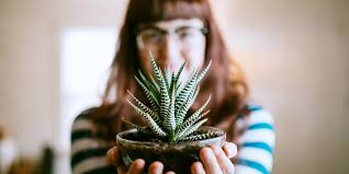House Plant Indirect Light The Best And Easiest Indoor Houseplants That Wont Die On You