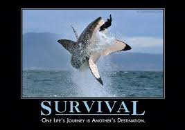 funny motivational posters for office. Survival-Shark Funny Motivational Posters For Office