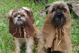 star wars 2 image number 2 of pet ewok costume