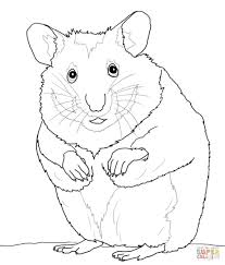 Small Picture Elegant Hamster Coloring Pages 96 For Your Coloring Site with