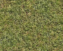 Textures Texture seamless Green grass texture seamless 12993