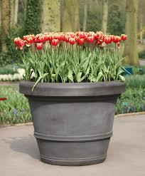 growing bulbs in outdoor containers garden bulb blog flower bulbs gardening tips