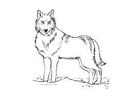 Coloriages Loup Les Animaux