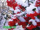 Как украсить сад в зиму