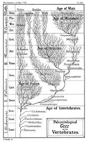 Chart Of Human Evaluation Timeline Of Human Evolution Wikipedia