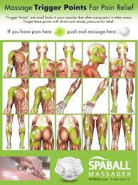 Muscle Pressure Points Chart Massage Trigger Points For Pain Relief Spaball Massager