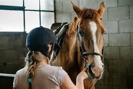 Tien Tips Om Gedrag Te Keuren Bij Kopen Paard Arlene Jansenarlene
