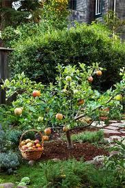 593 Best Fruit Trees Images On Pinterest  Fruit Trees Gardening Full Size Fruit Trees For Sale