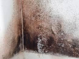 Cleaning Black Mold   HGTV