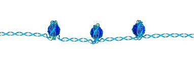Cystic Fibrosis Inheritance Pattern Enchanting Cystic Fibrosis Genetics Inheritance Pattern Of Cystic Fibrosis