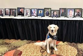 pause dog memorial frame collar police ministry dog collar memorial stone frame