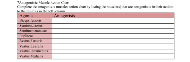 Muscle Action Chart Solved 7antagonistic Muscle Action Chart Complete The Ant