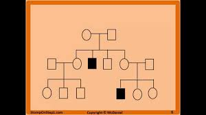 Pedigrees Patterns Of Genetic Inheritance Stomp On Step1
