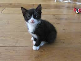 black and white kittens. Fine Kittens Cute Kittens Images Black And White Kittens HD Wallpaper Background  Photos On Black And White N