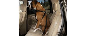 <b>Car</b> Safety and your <b>pet</b> - All <b>Pets</b> Education and Training
