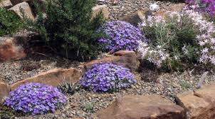 early spring perennials. Plain Perennials Phlox Lemhi Purple In Rock Garden And Early Spring Perennials G