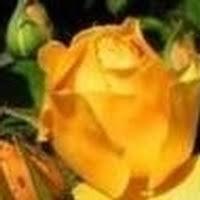 Obituary | Juanita Collins Hunt | Brazzel-Oakcrest Funeral Home