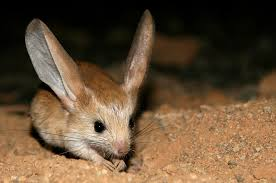 nocturnal desert animals. Simple Desert Picture For Nocturnal Desert Animals T