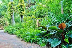 lush landscaping ideas. Lush Landscape And Garden Design Tropical Miami Knoll Landscaping Ideas H