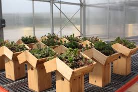 box gardens. green roof nesting boxes waiting to be installed at the smithsonian gardens greenhouses in suitland, box