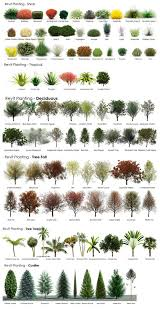 Trees And Shrubs Identification Chart Paper Garden