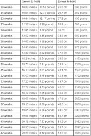 Average Baby Weight Chart During Pregnancy Baby Weight Chart During Pregnancy In Grams Uk Www
