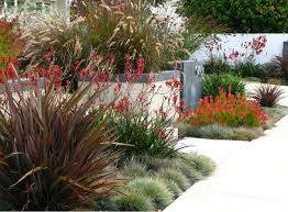 Small Picture Garden Ideas Landscaping Ideas Coastal plant Seaside plant