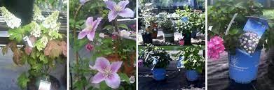walnut grove nursery in louisville ky
