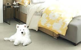 dog friendly flooring pet vinyl floor cleaner the best for your home pet friendly floor
