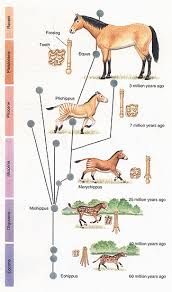 Horse Evolution Fraud Exposed 60 Years Ago Still In The