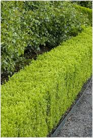 Smaller Understory Trees For A Tight SpotGood Trees For Backyard