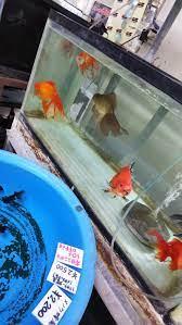 佐々木 養魚 場