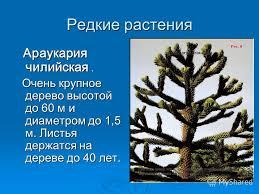 Презентация на тему Растительный и животный мир Южной Америки  2 Редкие