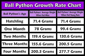 Ball Python Size Chart Rat Feeder Size Charts Google Search Raising Bearded