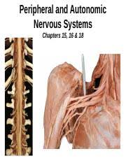 Explain How Sensory And Motor Neurons Are Organized Within
