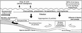Figure 4 4 5 Pelagic And Hemipelagic Sediments Which Were