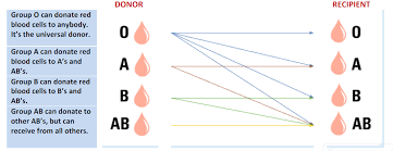 Blood Group Donate And Receive Chart Blood Type Donor Chart Jasonkellyphoto Co